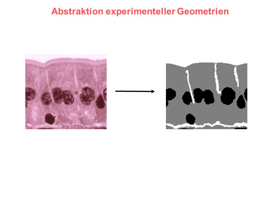 Abstraktion experimenteller Geometrien