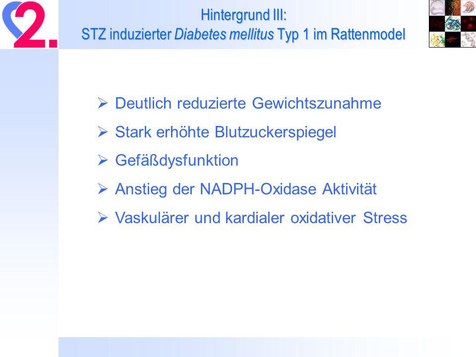 Hintergrund III: STZ induzierter Diabetes mellitus Typ 1 im Rattenmodel