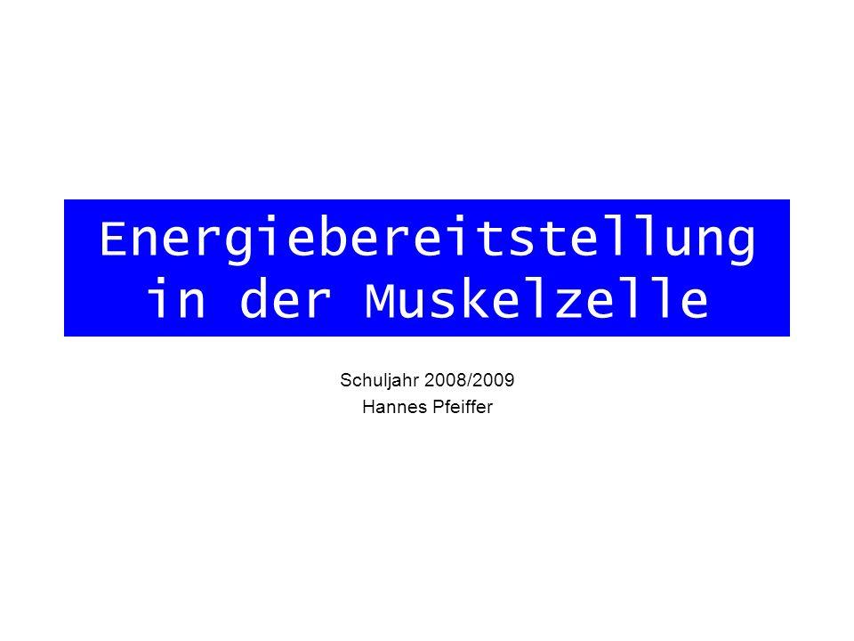 Energiebereitstellung in der Muskelzelle