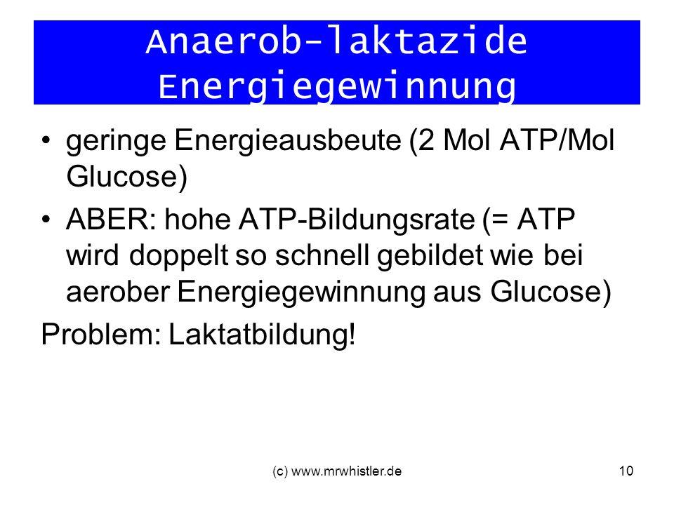 Anaerob-laktazide Energiegewinnung