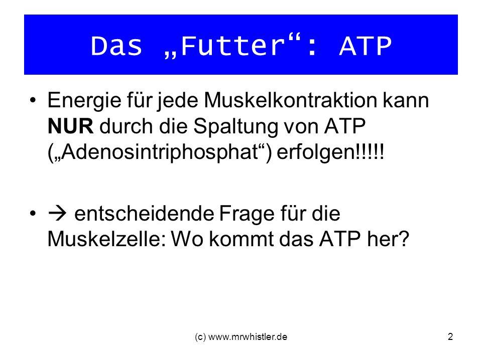 """Das """"Futter : ATP Energie für jede Muskelkontraktion kann NUR durch die Spaltung von ATP (""""Adenosintriphosphat ) erfolgen!!!!!"""