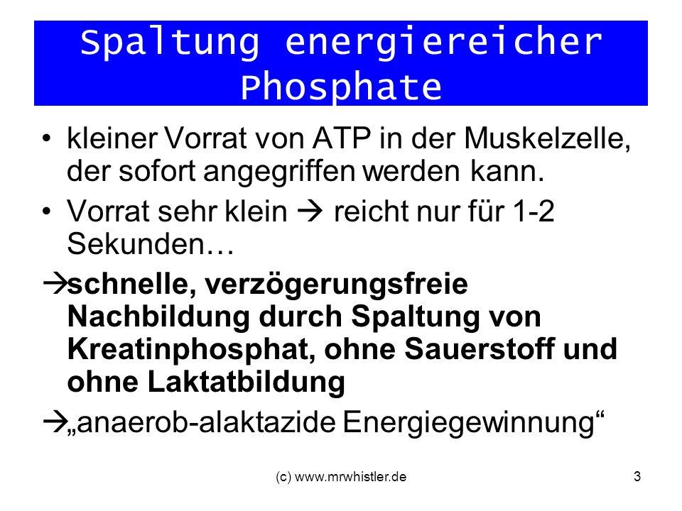 Spaltung energiereicher Phosphate
