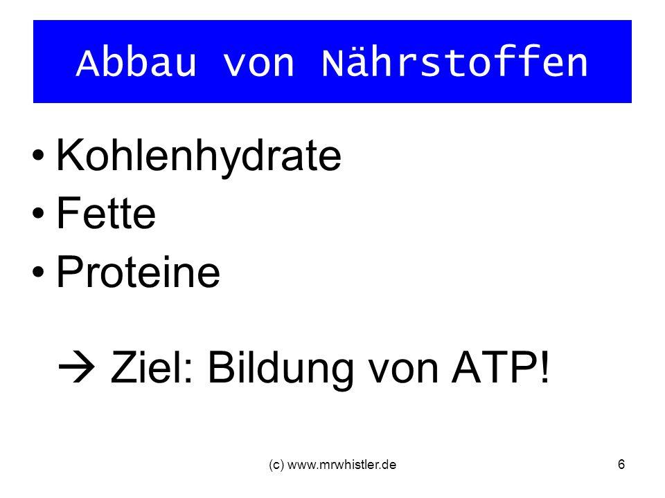 Proteine  Ziel: Bildung von ATP!