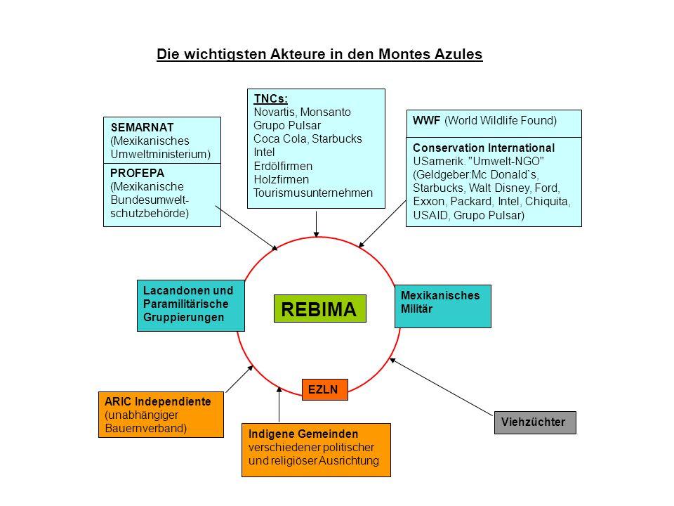REBIMA Die wichtigsten Akteure in den Montes Azules TNCs: