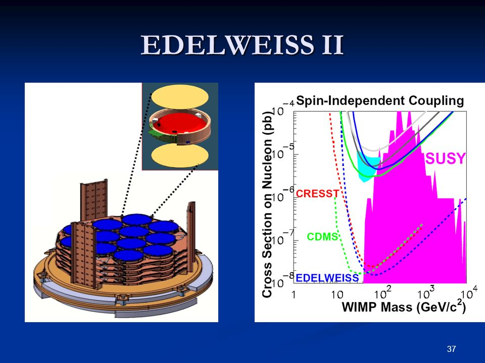EDELWEISS II 12 pro lage