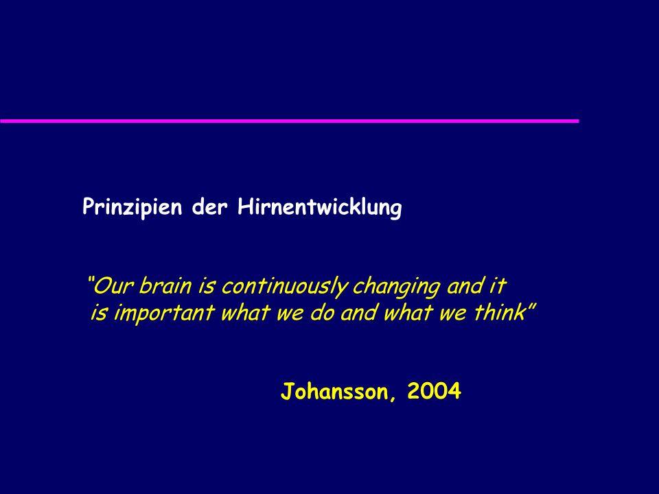 Prinzipien der Hirnentwicklung