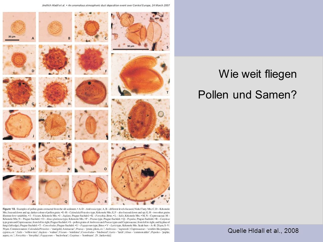 Wie weit fliegen Pollen und Samen Quelle Hldall et al., 2008