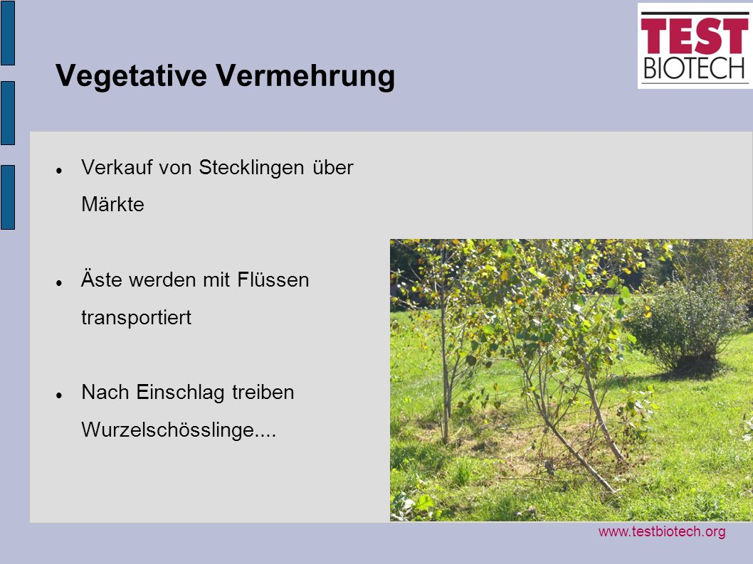 Vegetative Vermehrung