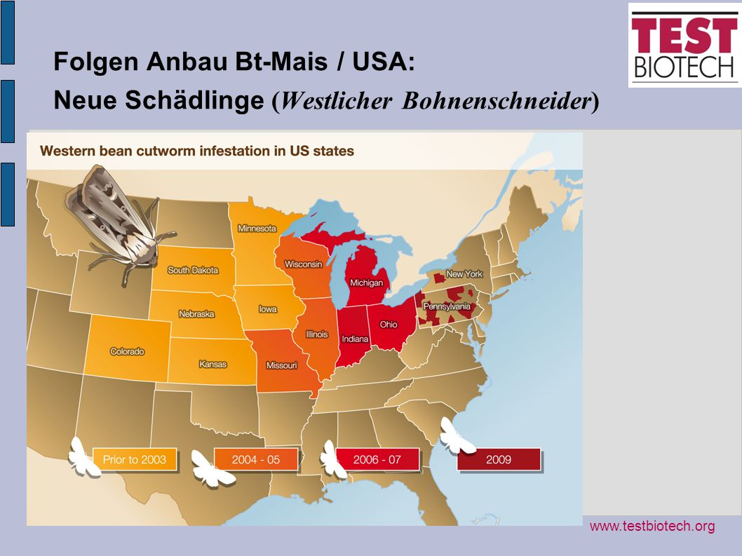 Folgen Anbau Bt-Mais / USA: Neue Schädlinge (Westlicher Bohnenschneider)
