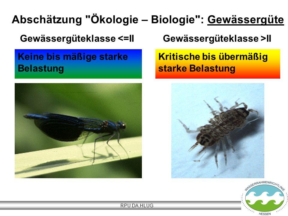 Abschätzung Ökologie – Biologie : Gewässergüte
