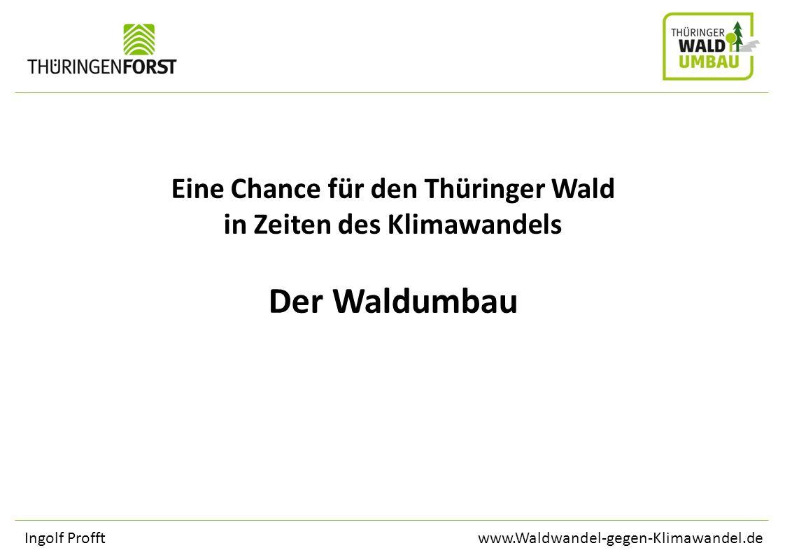 Eine Chance für den Thüringer Wald in Zeiten des Klimawandels