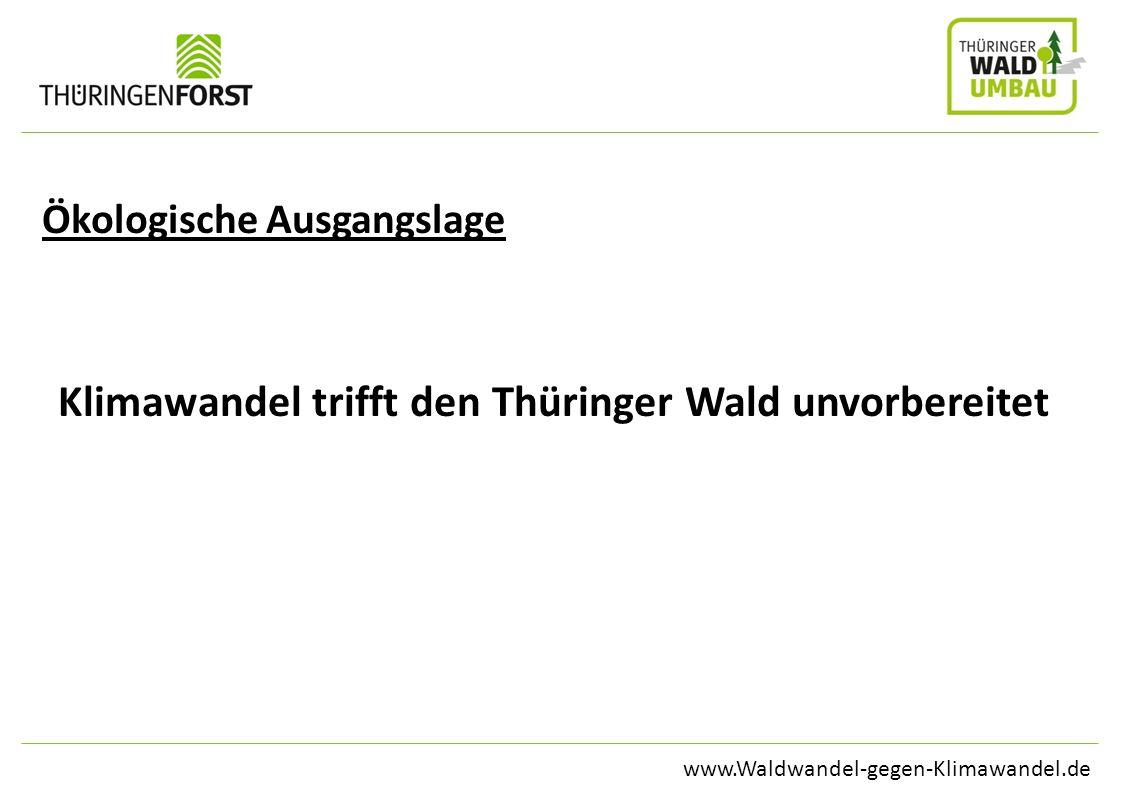 Klimawandel trifft den Thüringer Wald unvorbereitet