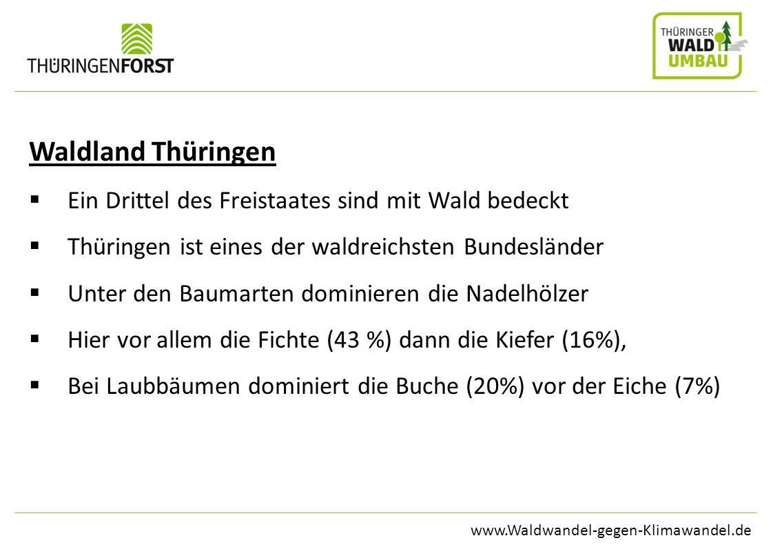 Waldland Thüringen Ein Drittel des Freistaates sind mit Wald bedeckt