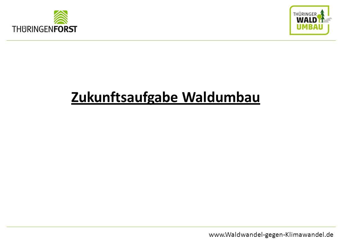Zukunftsaufgabe Waldumbau