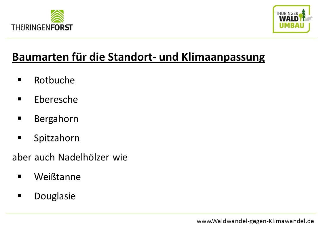 Baumarten für die Standort- und Klimaanpassung