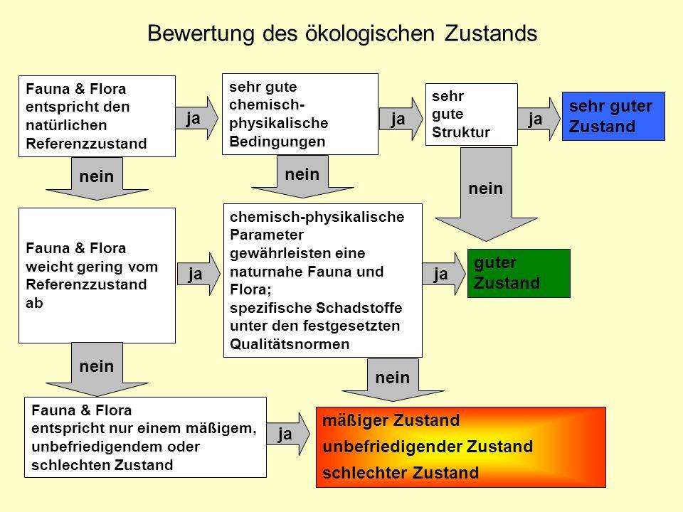 Bewertung des ökologischen Zustands