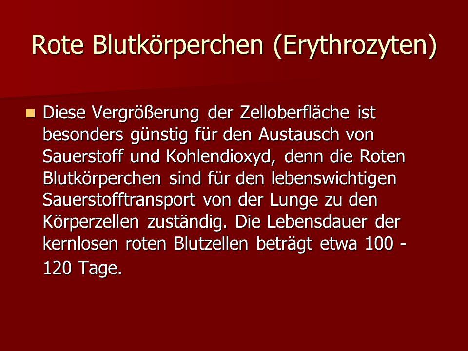 Rote Blutkörperchen (Erythrozyten)