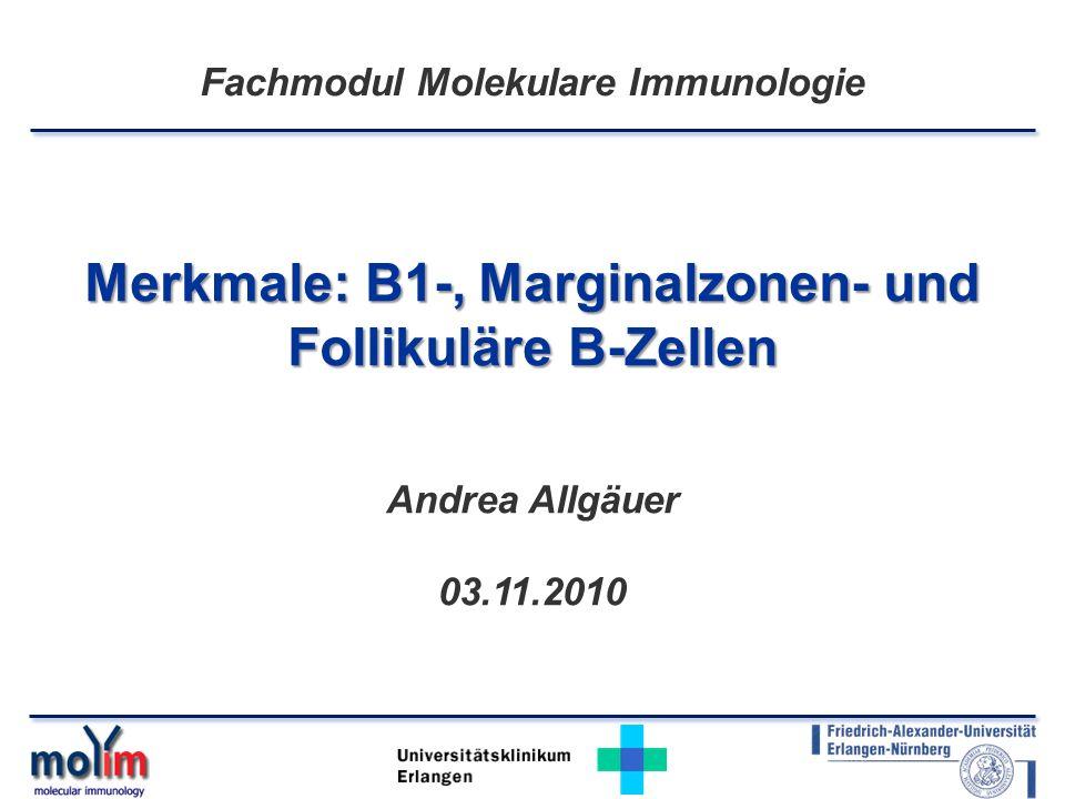 Merkmale: B1-, Marginalzonen- und Follikuläre B-Zellen