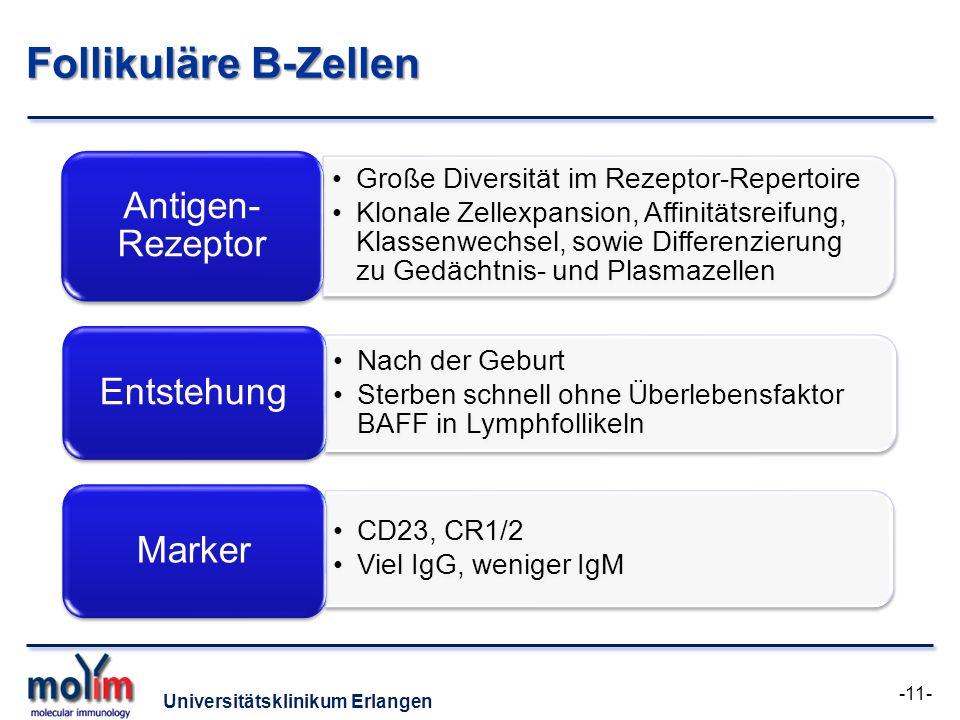 Follikuläre B-Zellen Antigen-Rezeptor Entstehung Marker