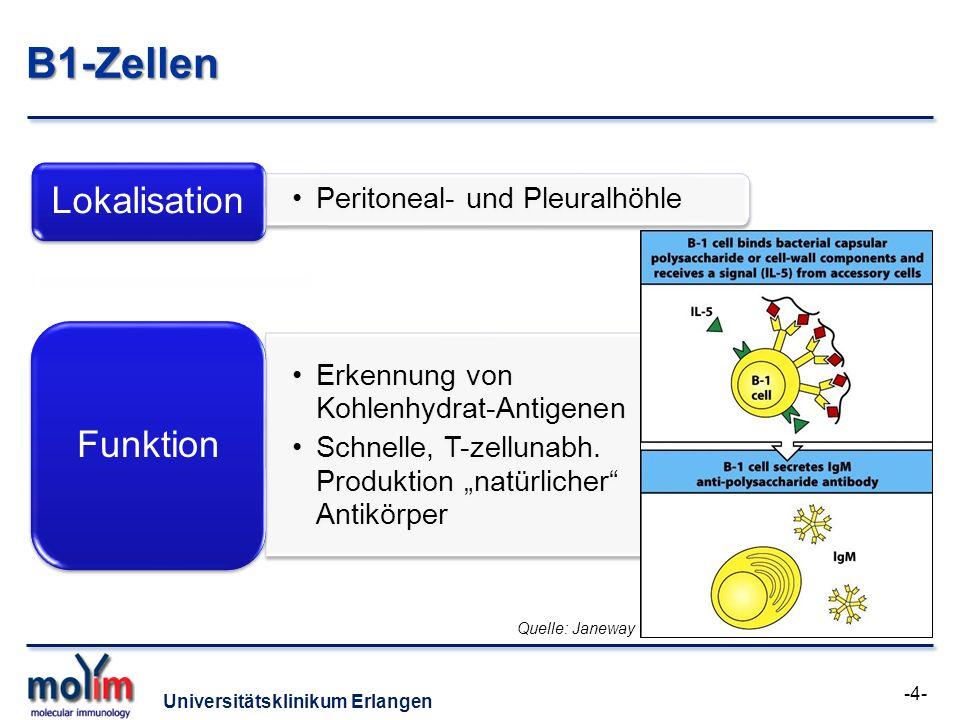 B1-Zellen Lokalisation Funktion Peritoneal- und Pleuralhöhle
