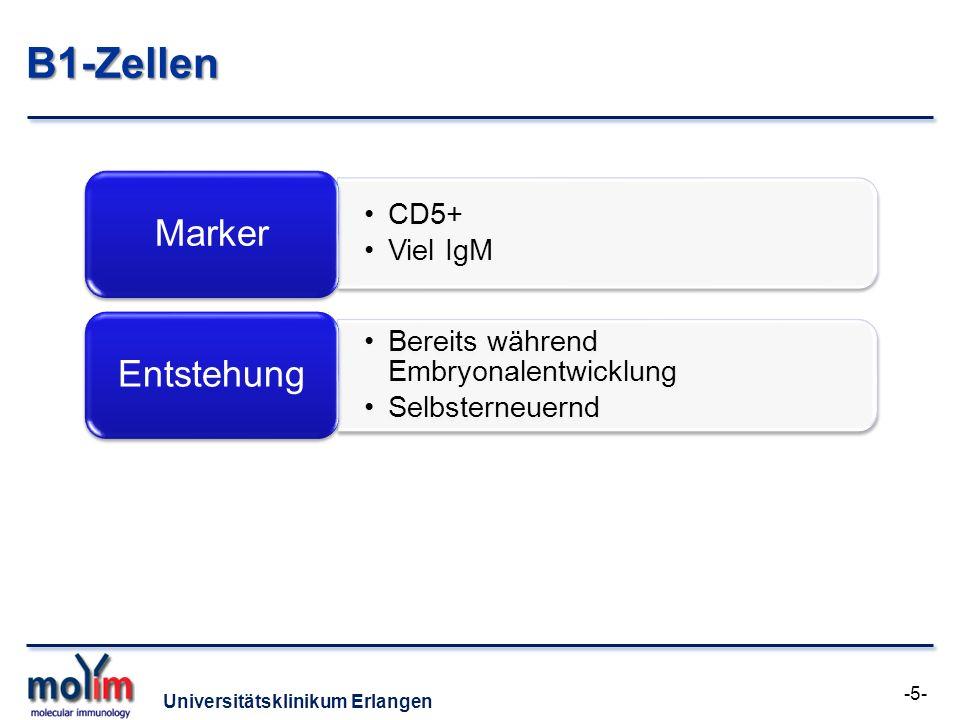 B1-Zellen Entstehung Marker CD5+ Viel IgM