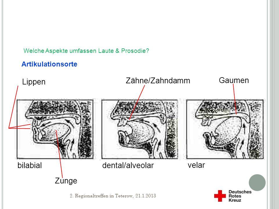 Lippen Zähne/Zahndamm Gaumen Zunge bilabial dental/alveolar velar