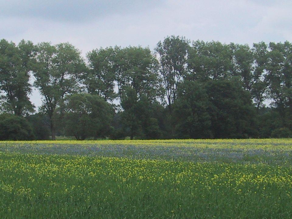 bDiese norddeutsche Landschaft wird uns die ganze Zeit begleiten. Es ist ein Feld, das zum Buschberghof gehört.