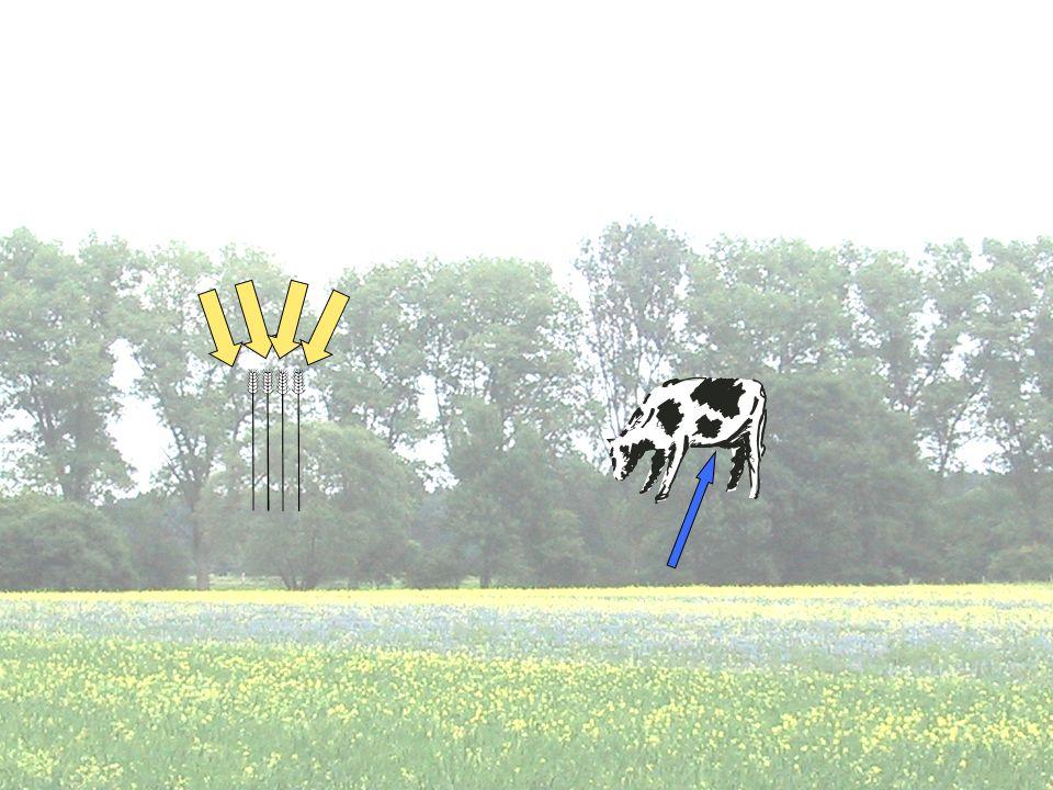 Zum Abschluss: Was glauben wir, ist das, was wir von Pflanze und Tier erwarten Hohe Erträge an Getreide.