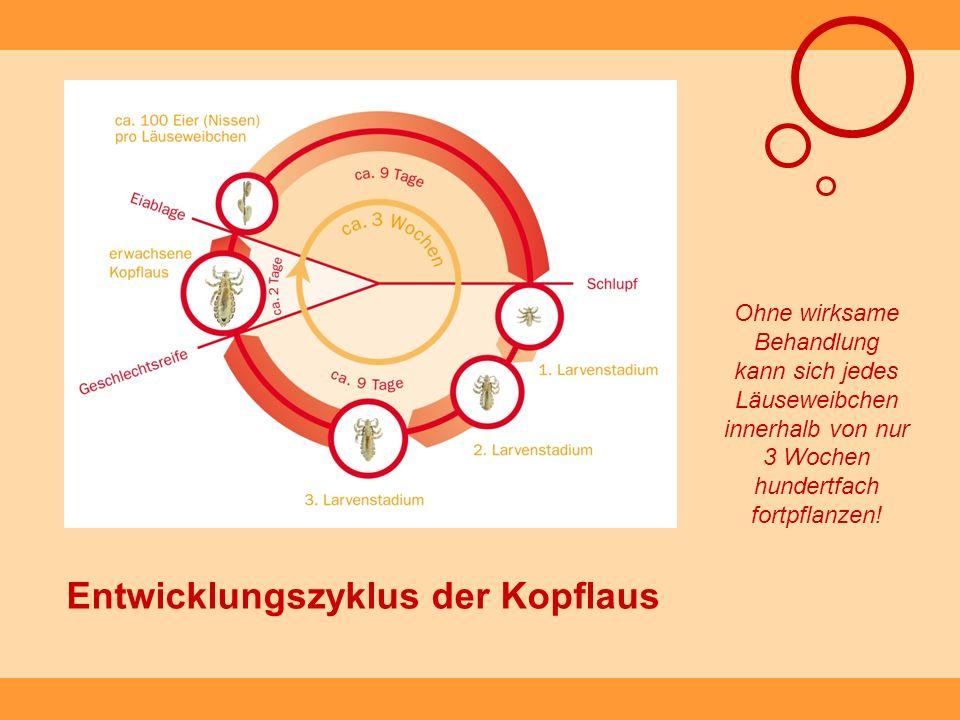 Entwicklungszyklus der Kopflaus