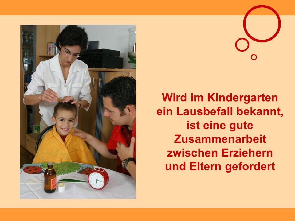 Wird im Kindergarten ein Lausbefall bekannt, ist eine gute Zusammenarbeit zwischen Erziehern und Eltern gefordert