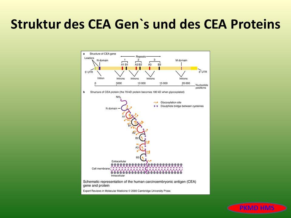 Struktur des CEA Gen`s und des CEA Proteins