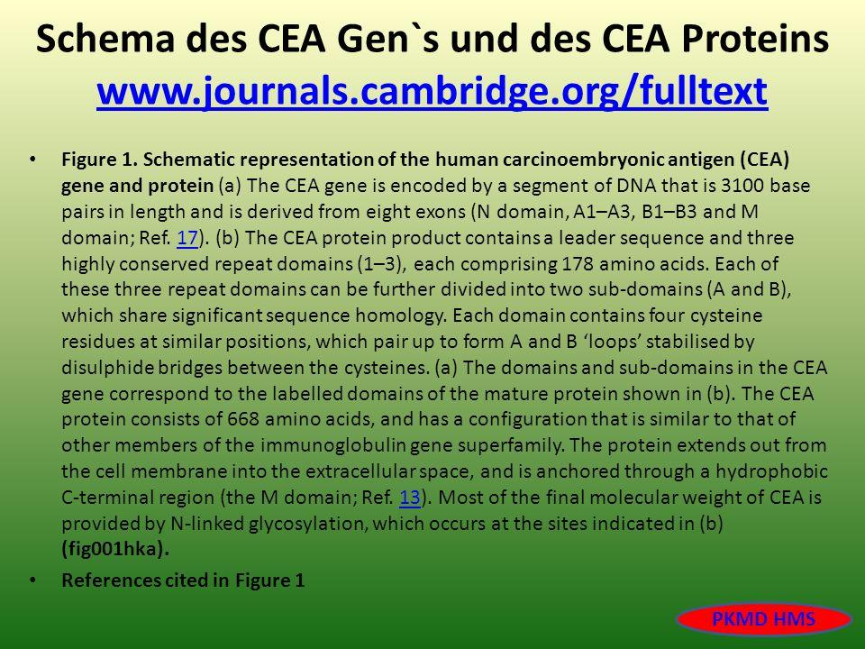 Schema des CEA Gen`s und des CEA Proteins www. journals. cambridge