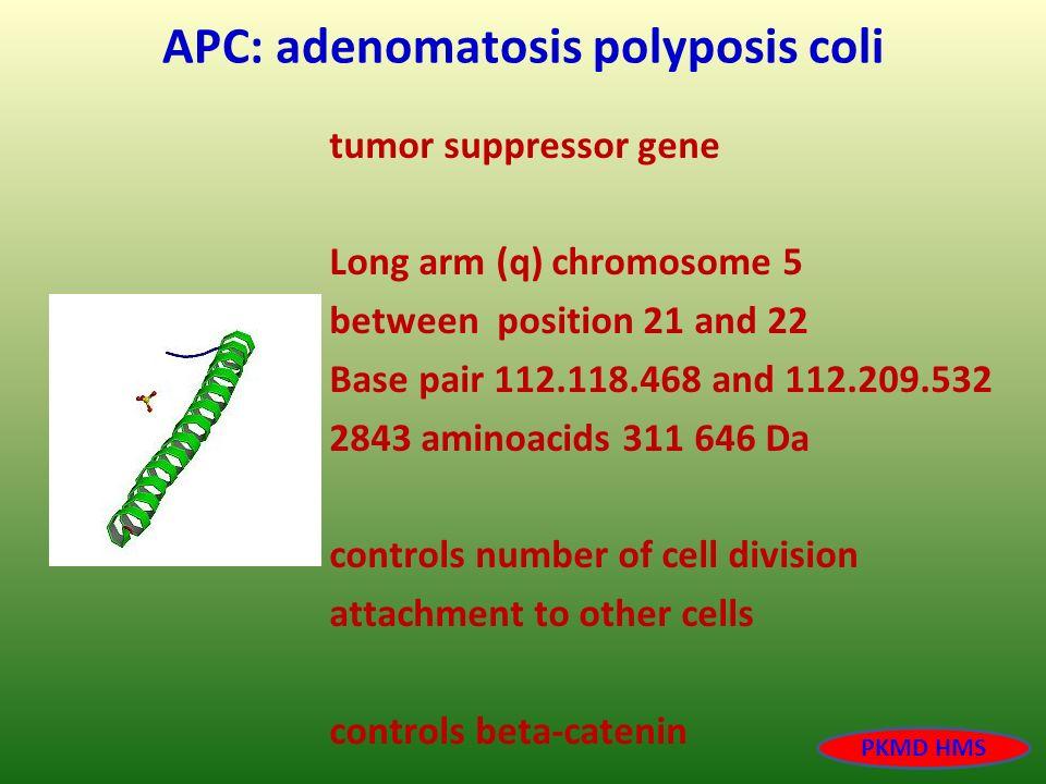 APC: adenomatosis polyposis coli