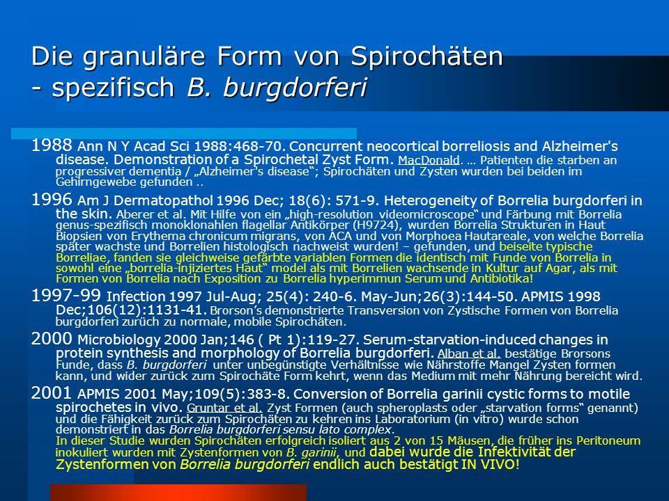Die granuläre Form von Spirochäten - spezifisch B. burgdorferi