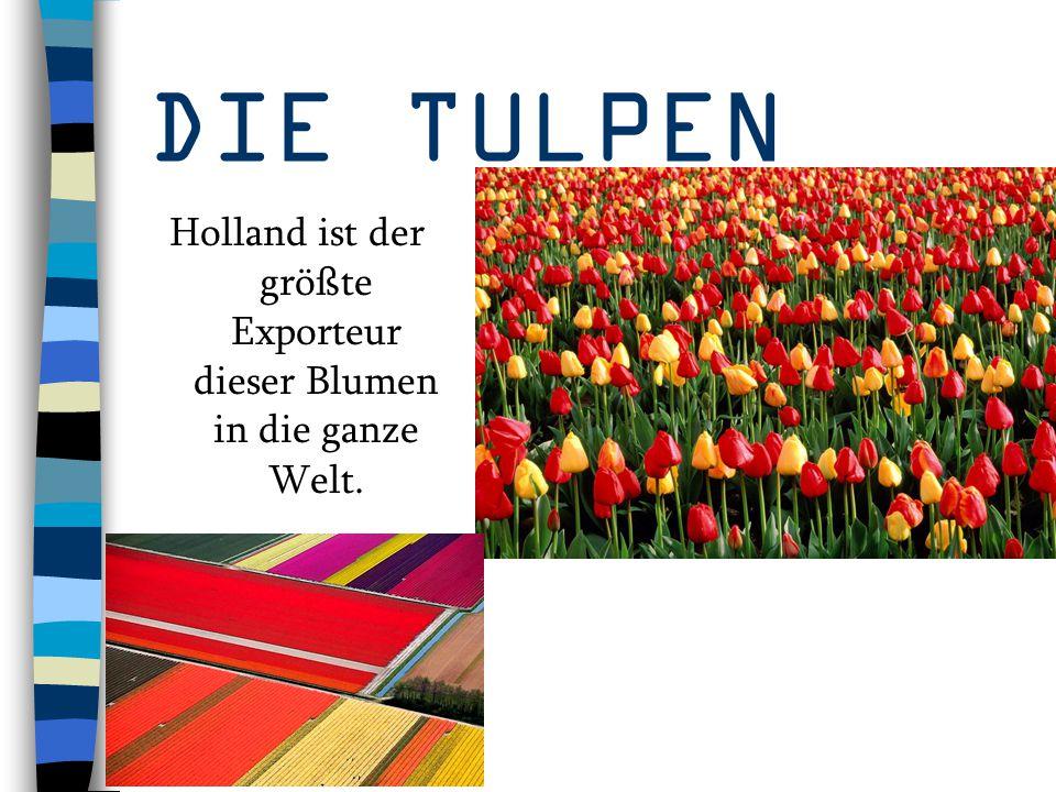 Holland ist der größte Exporteur dieser Blumen in die ganze Welt.