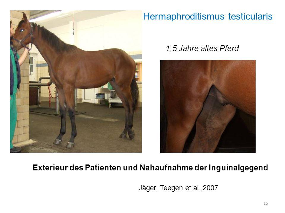 Exterieur des Patienten und Nahaufnahme der Inguinalgegend