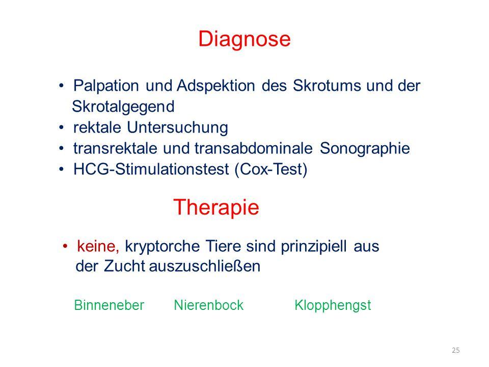 Diagnose Therapie Palpation und Adspektion des Skrotums und der