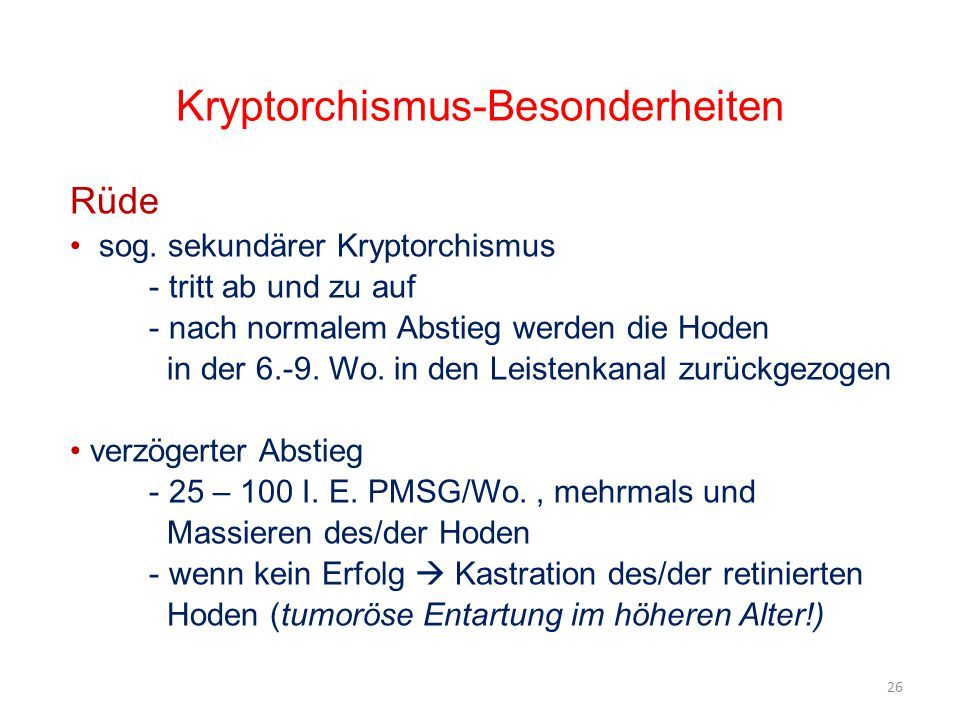 Kryptorchismus-Besonderheiten
