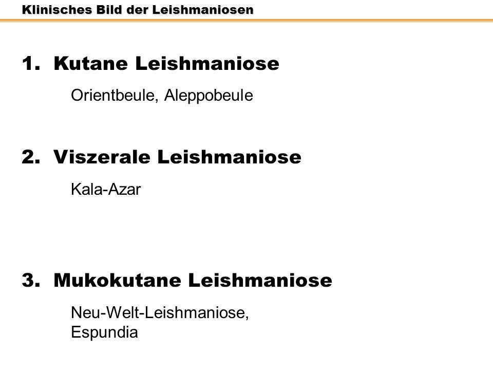 2. Viszerale Leishmaniose
