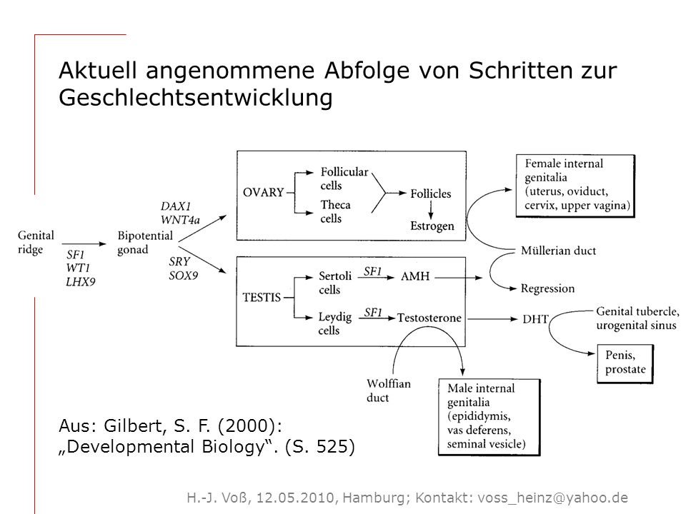 4 Um 2000: 'Erkenntnisse' aktueller Biologie wandeln sich (möglicherweise), weg von Differenz-, hin zu Gleichheitsbeschreibungen