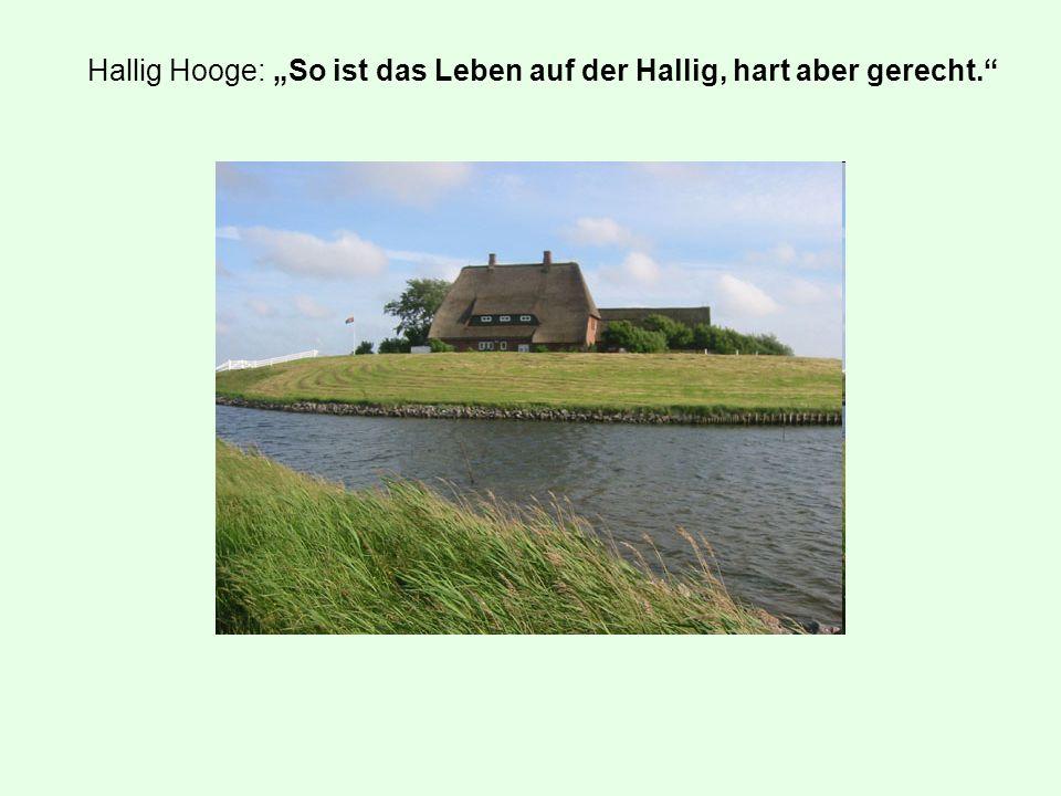 """Hallig Hooge: """"So ist das Leben auf der Hallig, hart aber gerecht."""