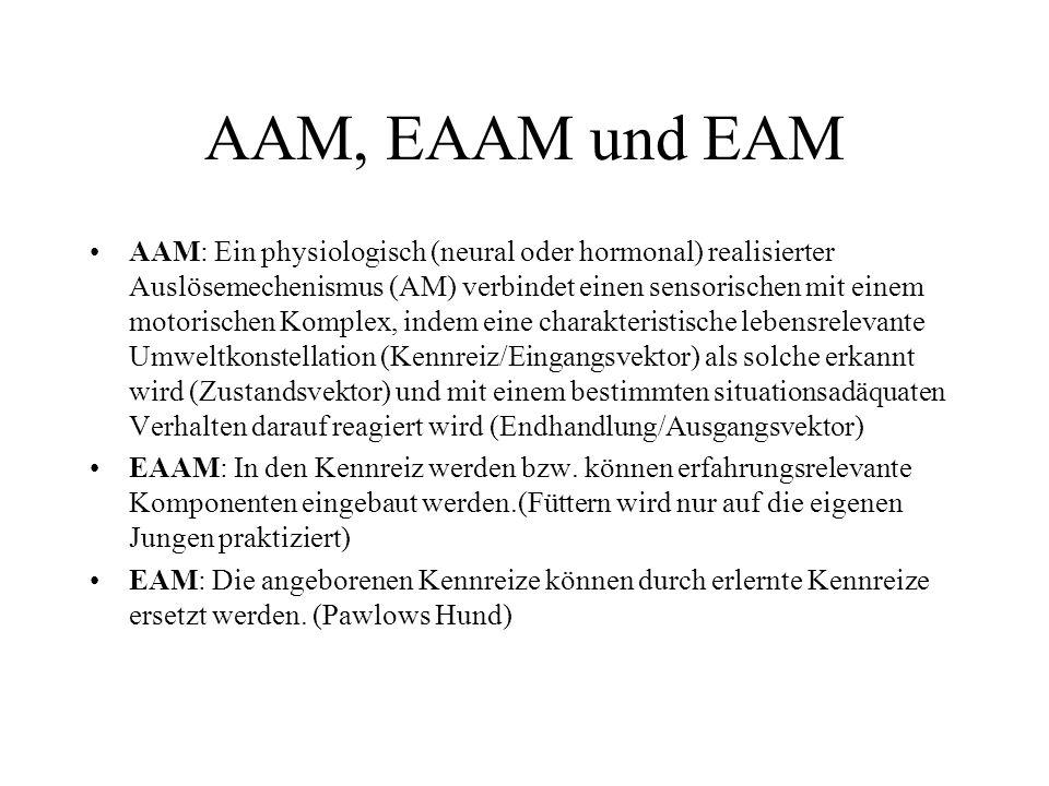 AAM, EAAM und EAM