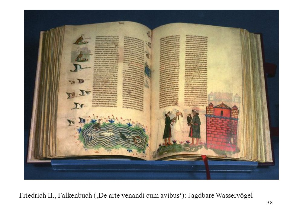 Friedrich II., Falkenbuch ('De arte venandi cum avibus'): Jagdbare Wasservögel