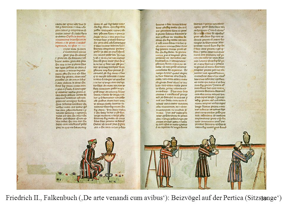 Friedrich II., Falkenbuch ('De arte venandi cum avibus'): Beizvögel auf der Pertica (Sitzstange')