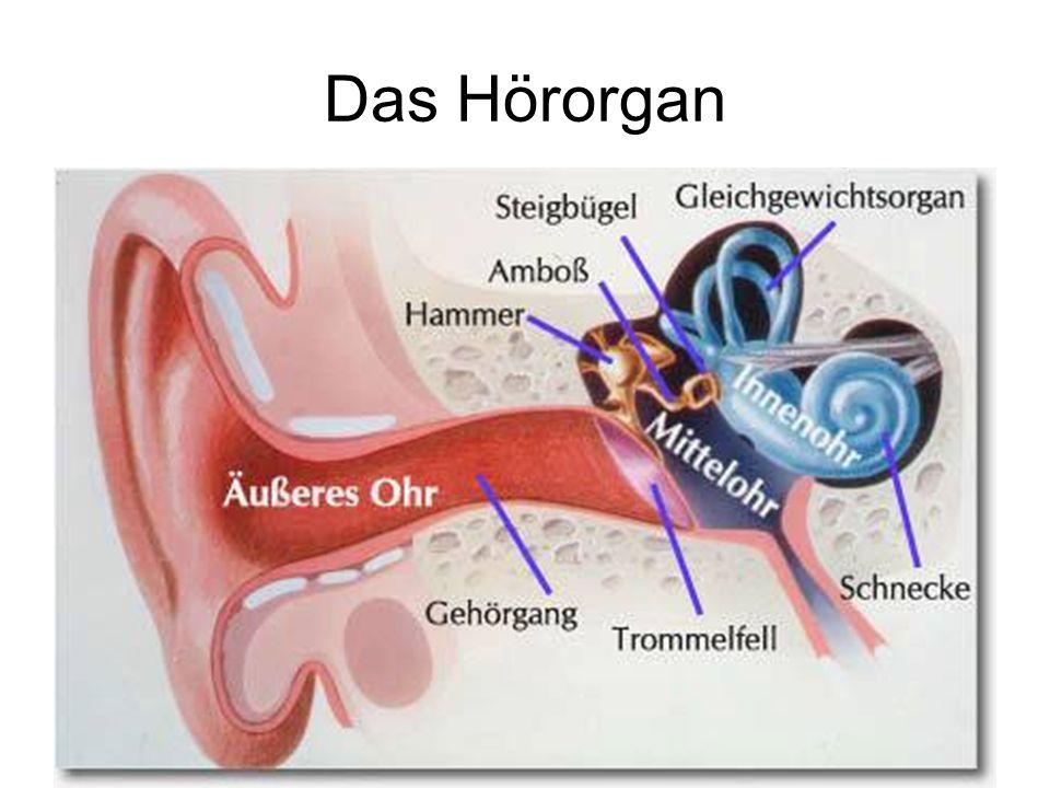 Das Hörorgan