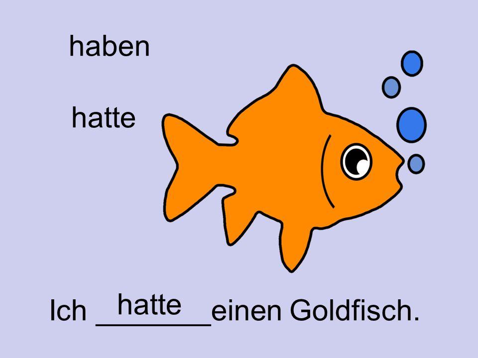 haben hatte Ich _______einen Goldfisch. hatte