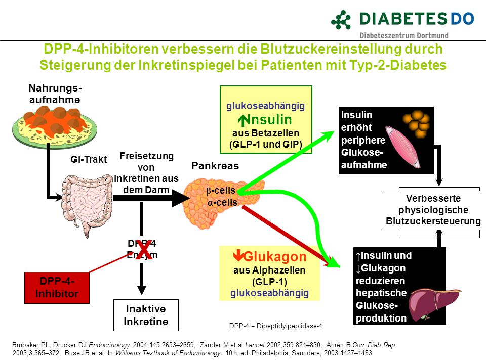 DPP-4-Inhibitoren verbessern die Blutzuckereinstellung durch Steigerung der Inkretinspiegel bei Patienten mit Typ-2-Diabetes