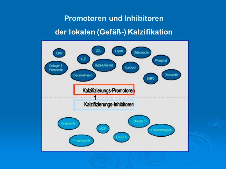 Promotoren und Inhibitoren der lokalen (Gefäß-) Kalzifikation