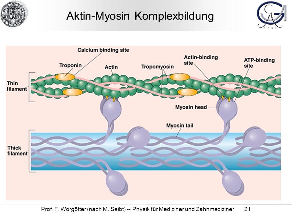 Aktin-Myosin Komplexbildung
