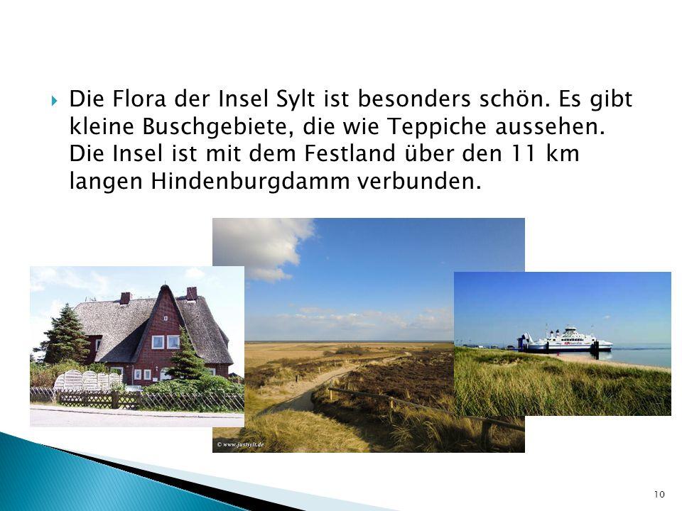 Die Flora der Insel Sylt ist besonders schön